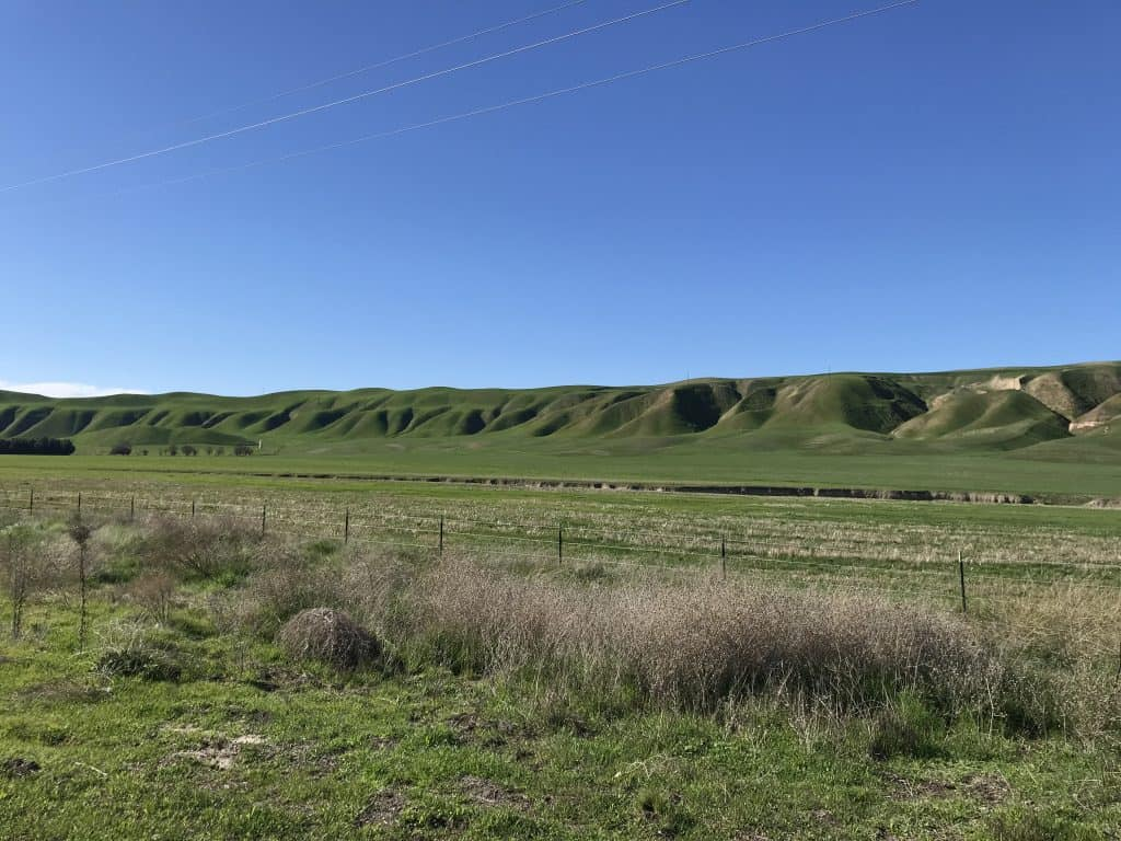 The green rolling hills of the central valley in California