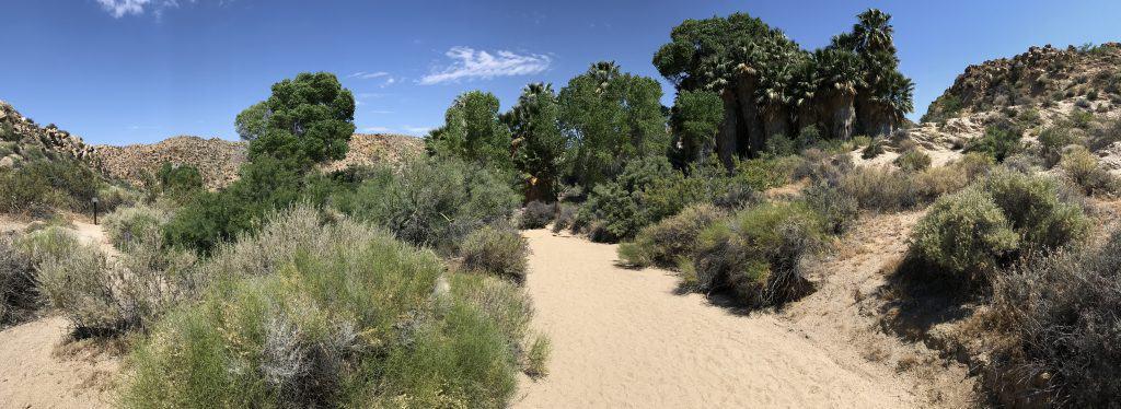 Cottonwood Springs Oasis Panorama