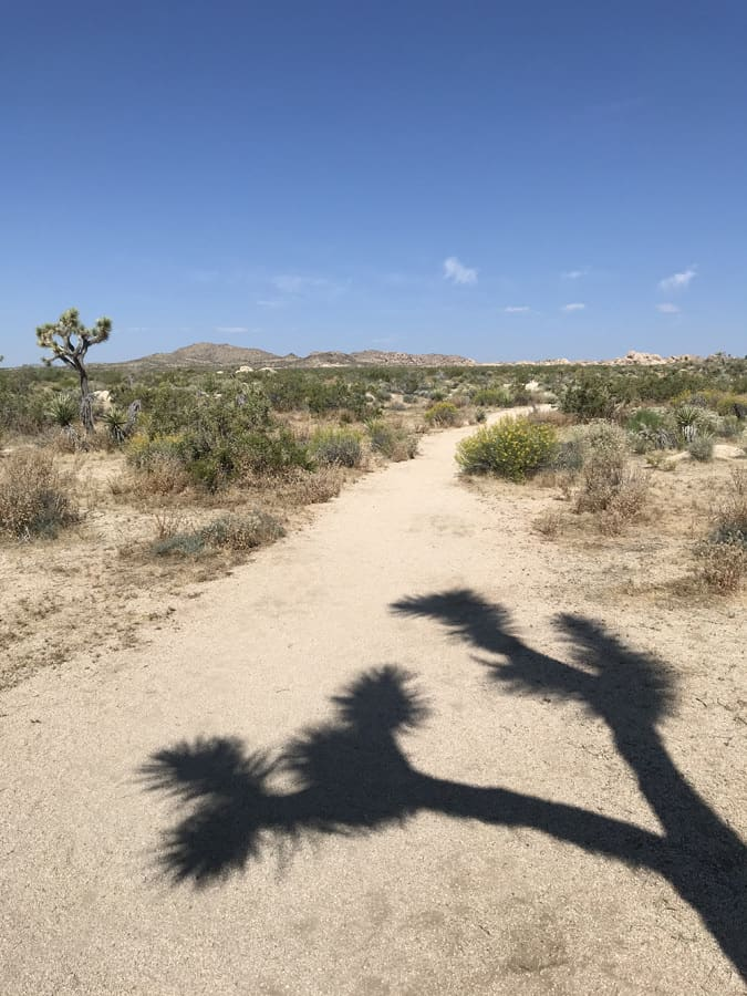Arch Rock trail with shadow of Joshua Tree