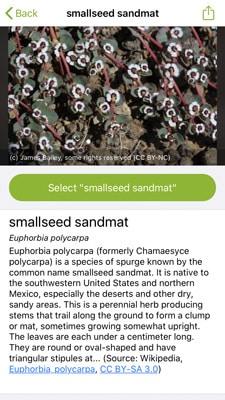 iNaturalist screenshot IDing flowers