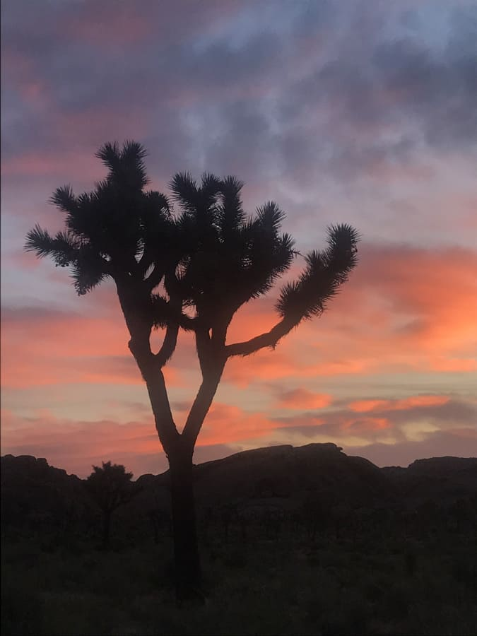 How to Plan a Terrific Joshua Tree Camping Escape – in the Summer