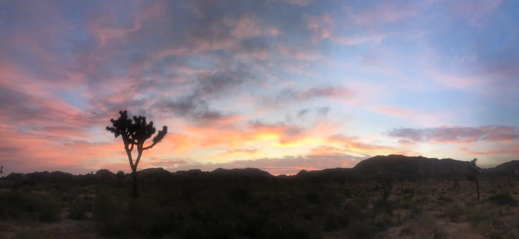 Sunrise panorama in Joshua Tree National Park