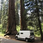 Promaster campervan in front of sequoia trees