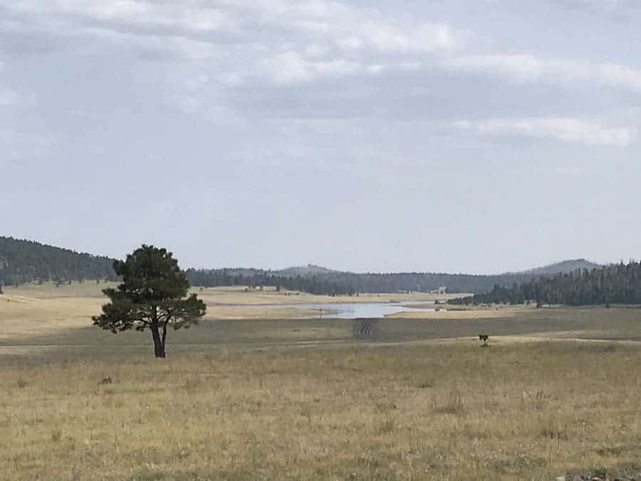 Grasslands, meadows, pine forest and small lakes found at  high elevation in this free camping area of National Forest in  Central Arizona.
