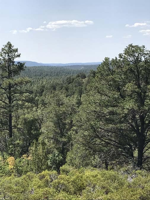 View from The Mogollon Rim Trail. Ponderosa pine forest